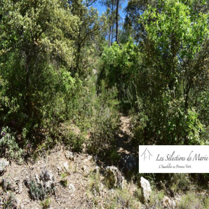 Offres de vente Terrain Vins-sur-Caramy (83170)